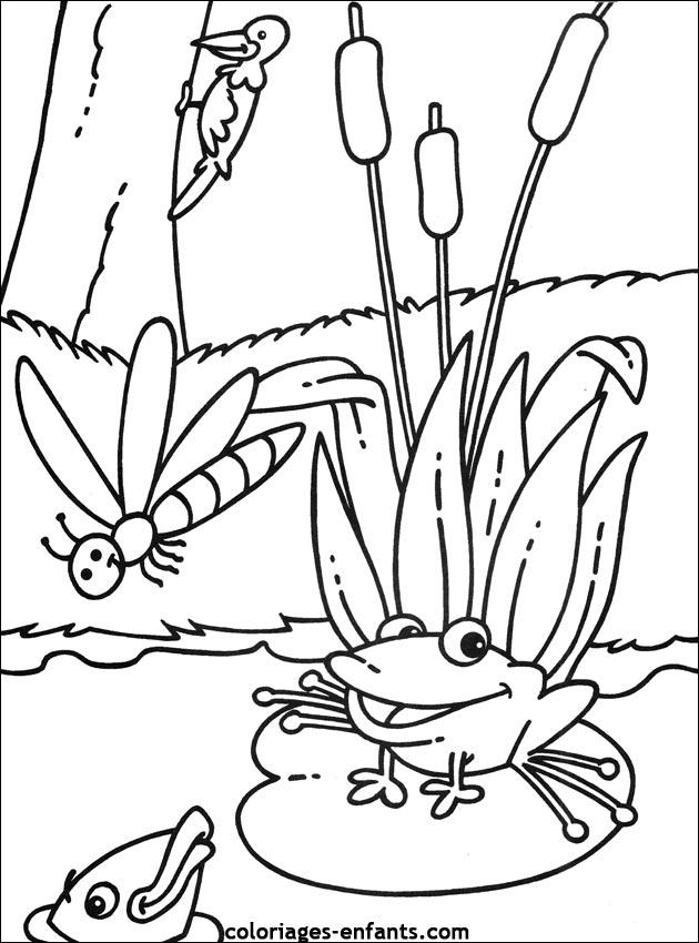 Coloriage de grenouilles imprimer de la rubrique animaux - Grenouille a colorier ...