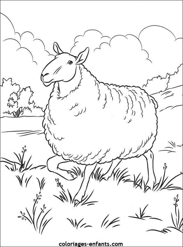 Index Of Rubrique Animaux Images Coloriages Moutons