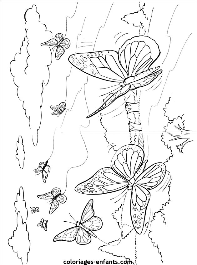 Coloriage de papillon - Coloriage de papillon ...