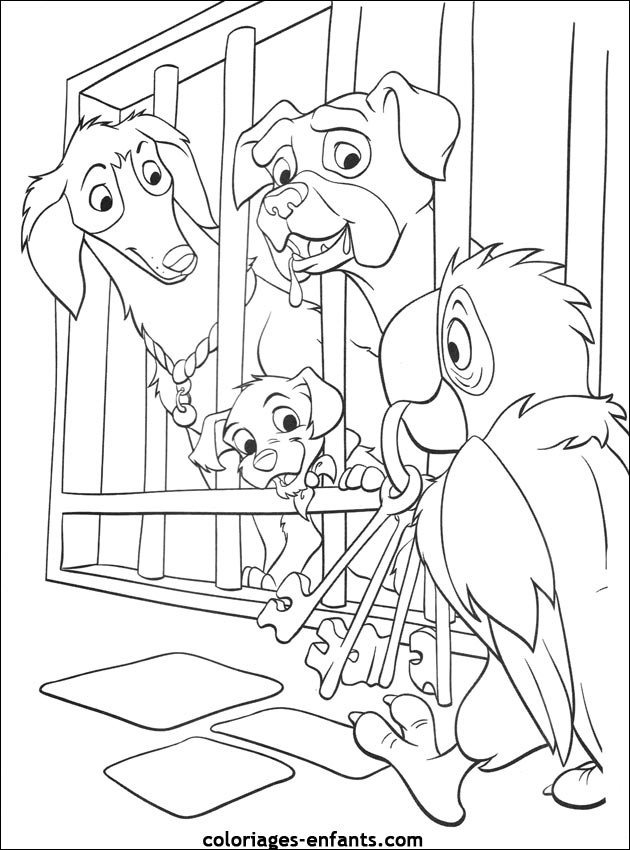 Image de perroquet imprimer des photos des photos de fond fond d 39 cran - Perroquet en dessin ...