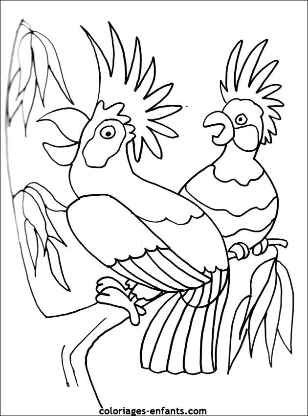 Coloriage d 39 perroquets de la rubrique animaux imprimer de coloriages enfants - Coloriage de perroquet ...