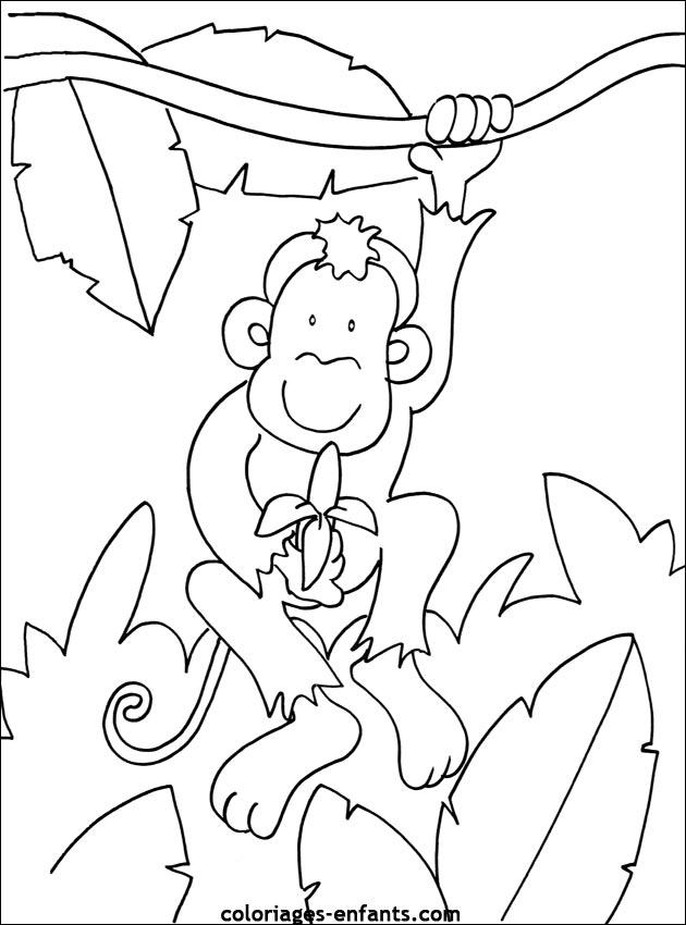 Coloriage de singe à imprimer sur coloriages-enfants.com