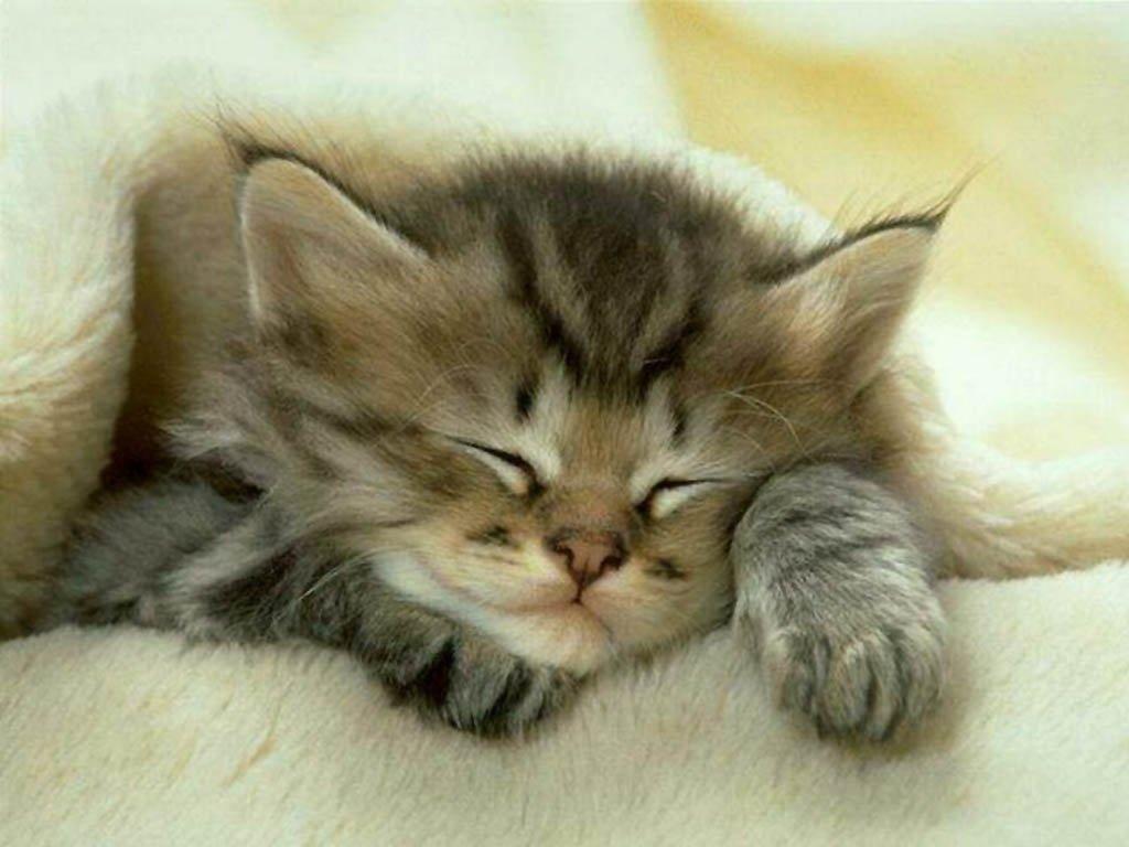 Les fonds d'écran de chats