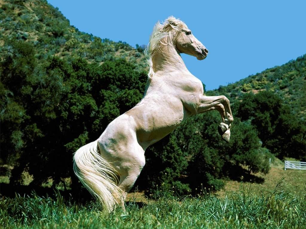 Souvent Les fonds d'écran de chevaux NG82