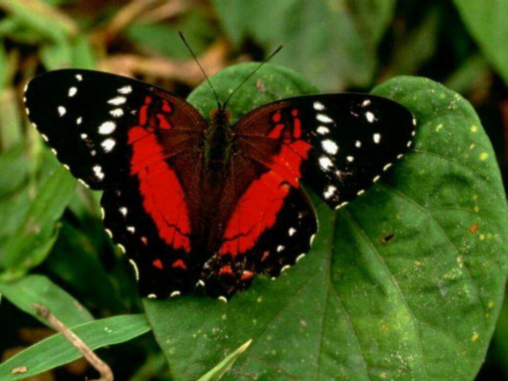 Les fonds d 39 cran de papillons - Images de papillon ...
