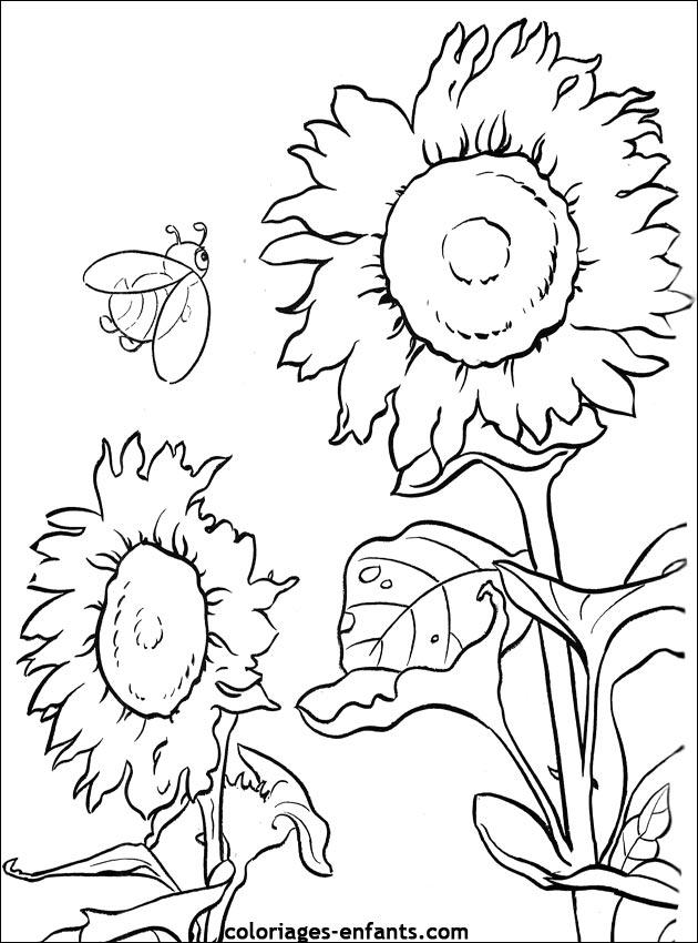Coloriage de fleus - Coloriage des fleurs ...