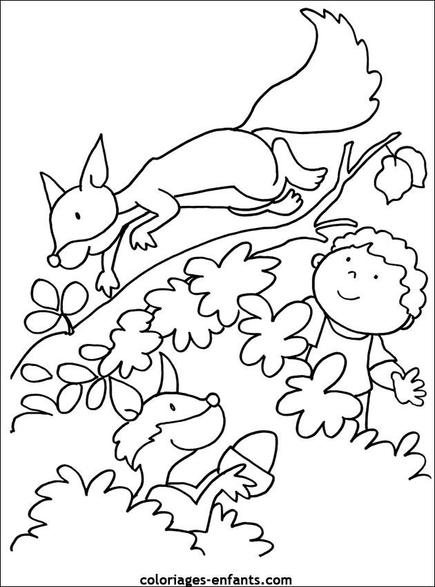 Coloriages D Ecureuils A Imprimer