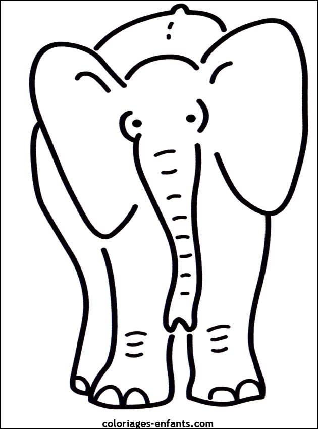 elephant 64