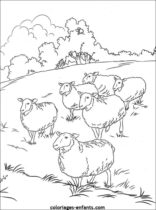 Coloriage De Moutons à Imprimer Sur Coloriages Enfants