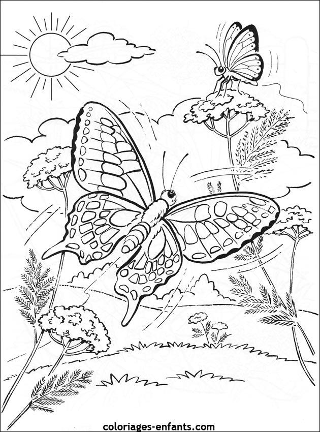 Coloriage d'papillons de la rubrique animaux à imprimer de ...