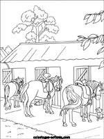 Coloriages D Equitation